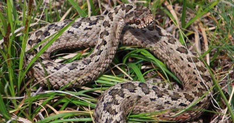 Обережно змії