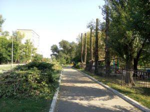 Варварская обрезка деревьев 20 сентября на улице Озерная (Фото)