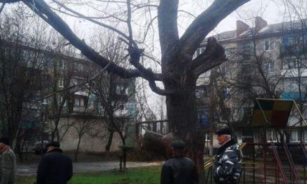 Чому заважають дерева в Павлограді
