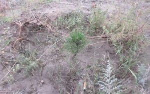 «33 квадратных метра» против 288 деревьев