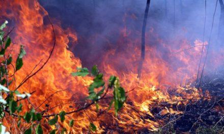 Друге місце в Україні за кількістю лісових пожеж займає Дніпропетровщина