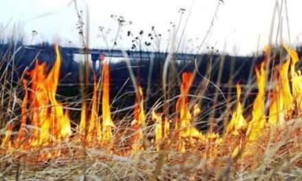 Правительство хочет в разы увеличить штрафы за сжигание листьев и травы