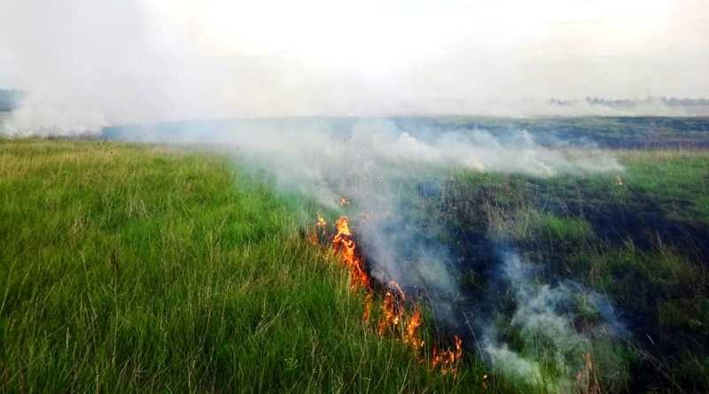 В Павлоградському районі ліквідовують займання в екосистемах