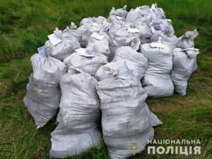 Виявлено більше 15 тисяч конопель на суму понад 2 млн гривень