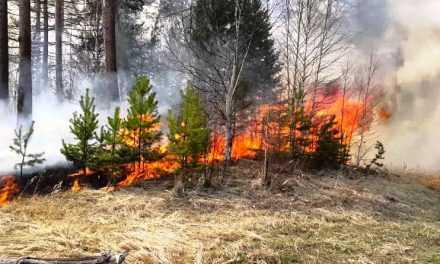 В Дніпропетровській області заборонили відвідувати ліси