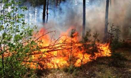 На Дніпропетровщині заборонили відвідувати ліс. Найвищий клас пожежної небезпеки