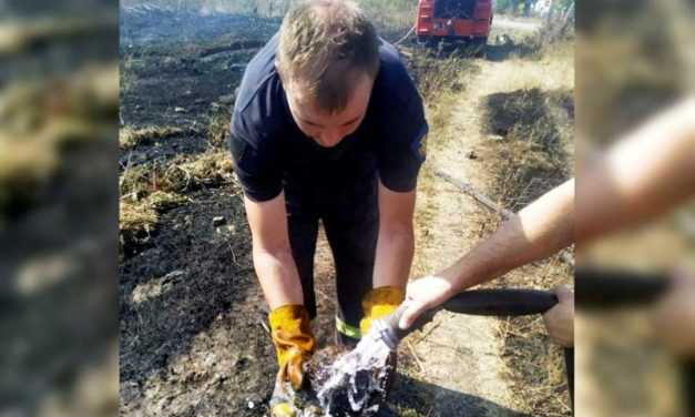 В Павлограде спасатели уберегли от огня ежика