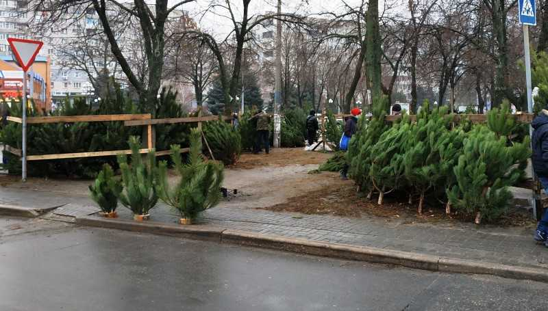 В Павлограде начали продажу ёлок: сколько стоит главный атрибут Нового года?