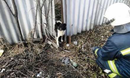 Павлоградские спасатели оказали помощь беспомощному животному